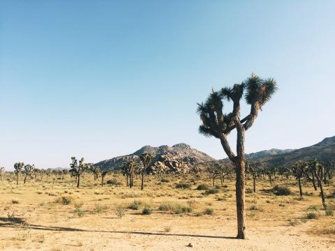 Quite Continental: Joshua Tree